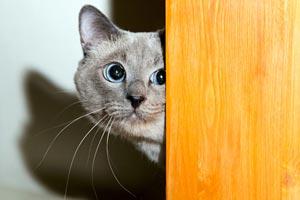 CBD Oil for Cats Seizures