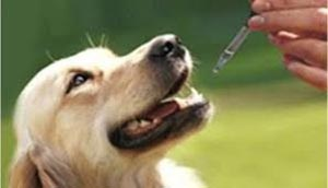 How to Give Your Dog CBD Oil