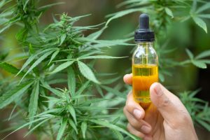 CBD Tinctures vs Cannabis Oils